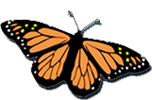 fearlessjourney_butterfly_logo_ondark_transp